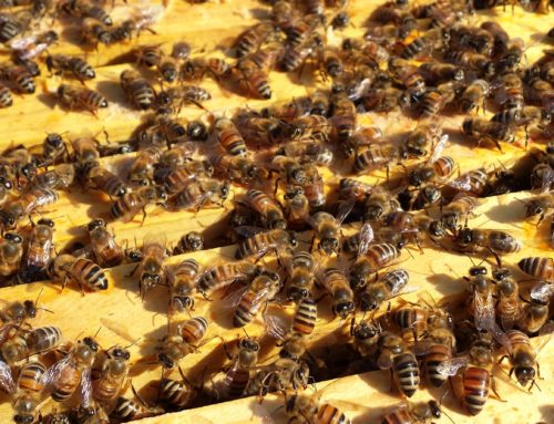 Beekeeping 101 starts Monday, January 19th