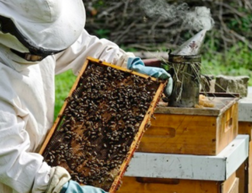 BK 101W – Beekeeping 101 in the Apiary