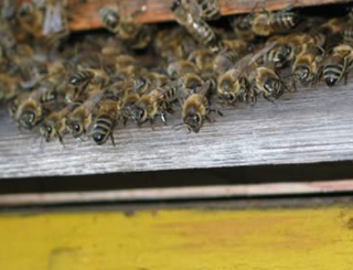 US National Beekeeper Survey