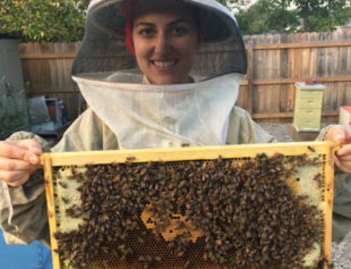 Beekeeping 101 January 11th & March 17